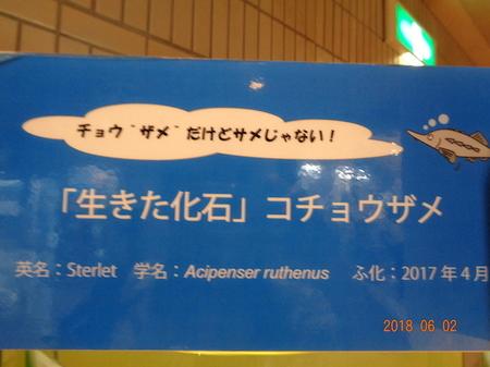 099エキスポセンター16.JPG
