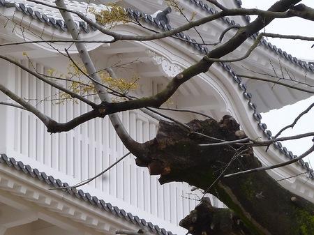 315姫路城6.JPG