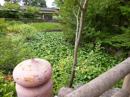981瑠璃宝の池・琴電屋島3.JPG