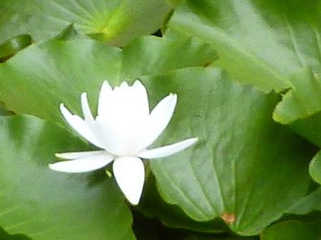981瑠璃宝の池・琴電屋島6.JPG